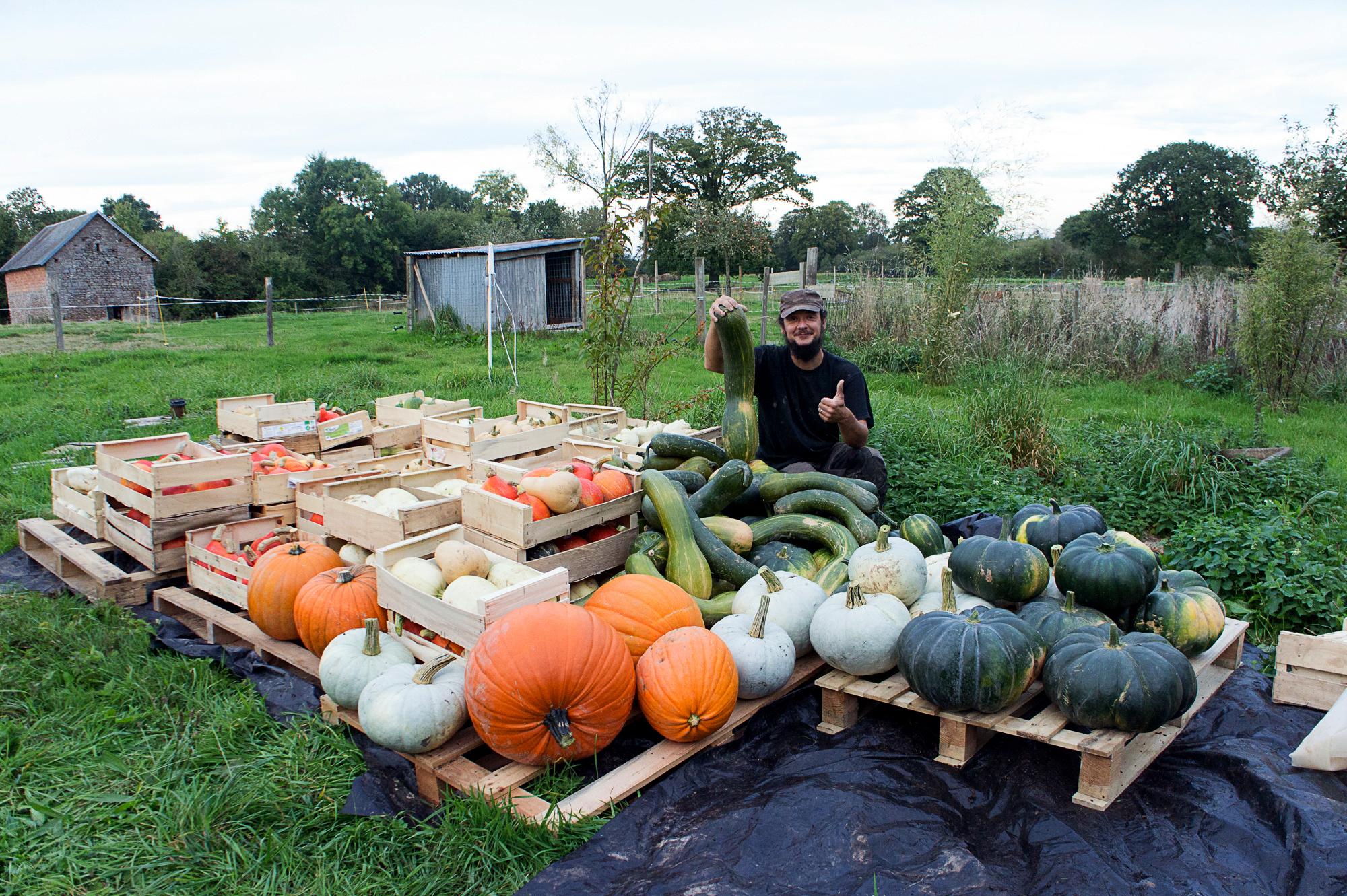 La ferme St-Ursin, légumes frais et bio, maraîcher du sud Manche