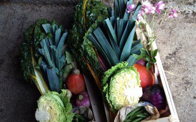 panier de légumes bio dans la Manche